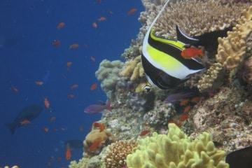Scuba Diving with Sharks (Fiji)