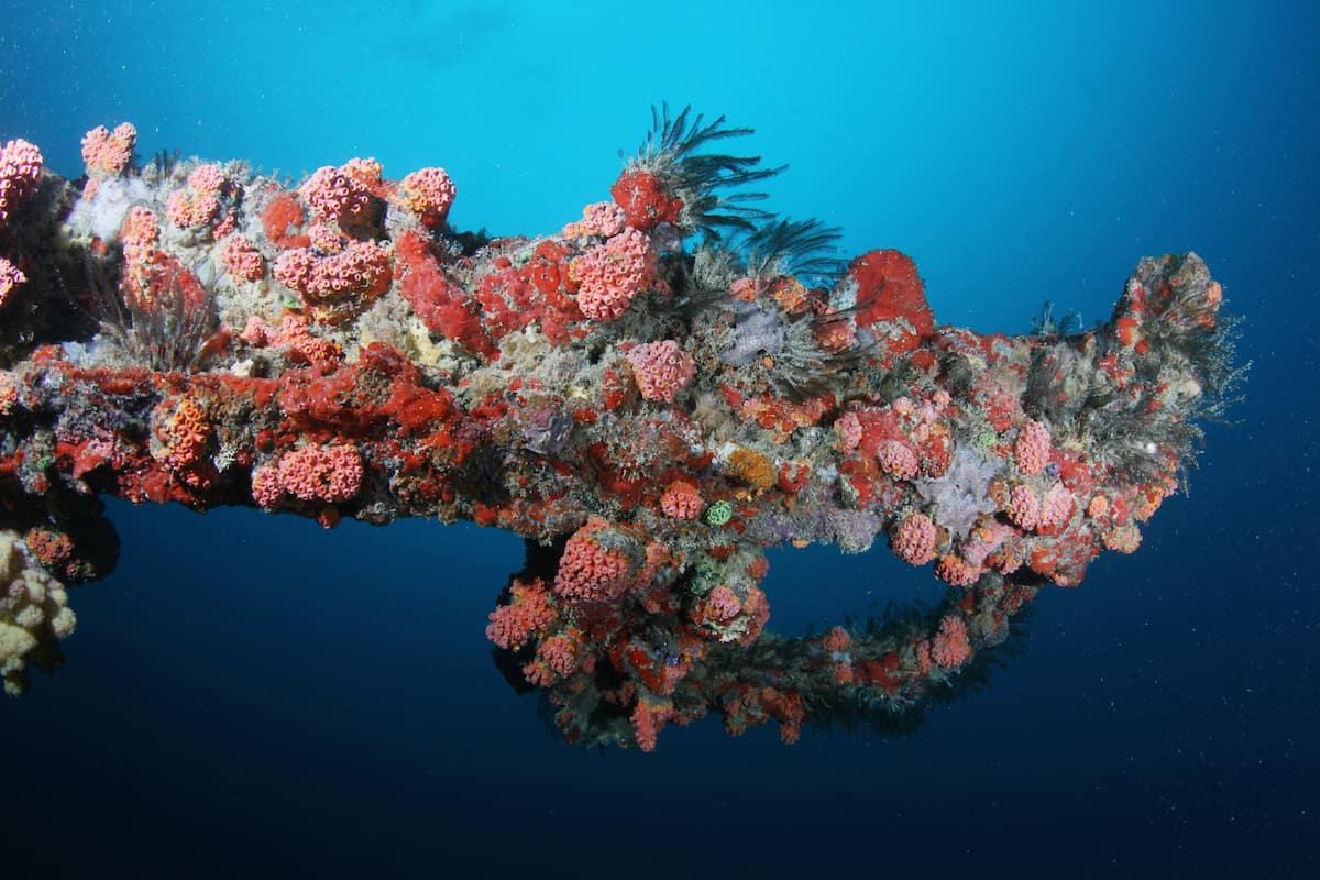 Iro Maru Wreck - Palau