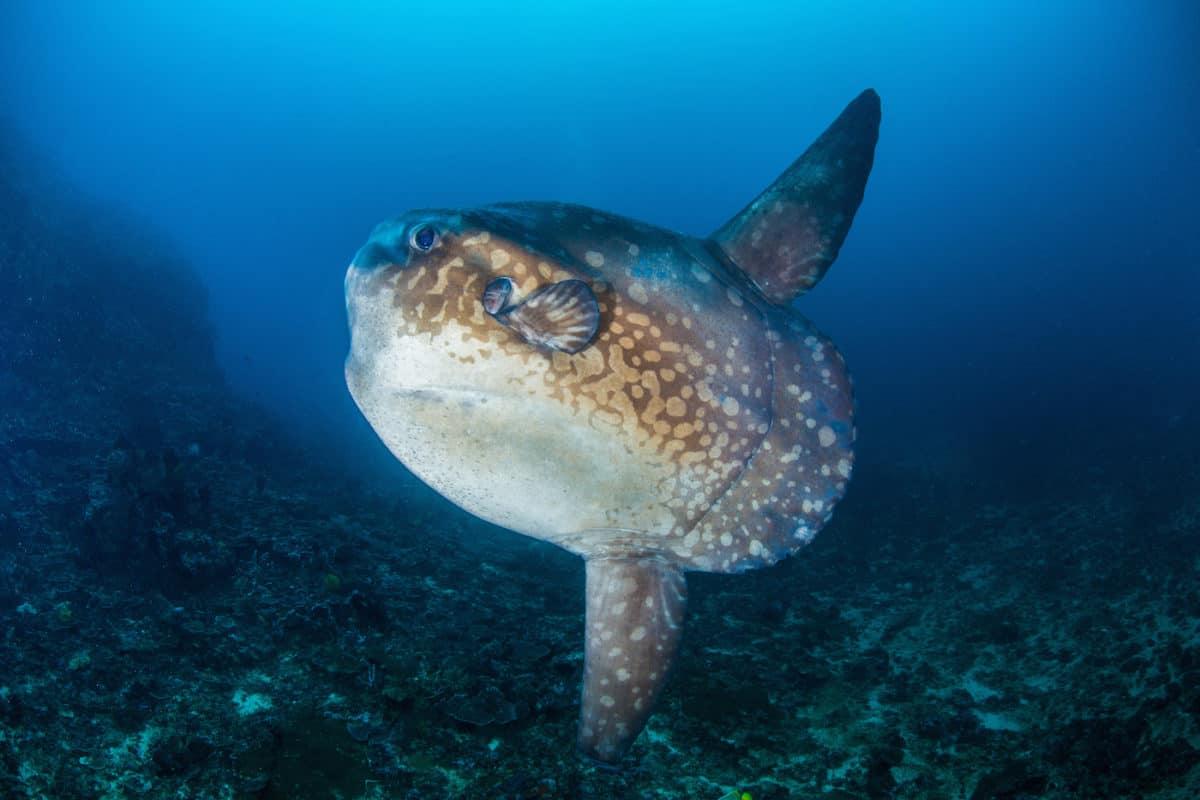 Liveaboard Diving in Galapagos Islands, Ecuador