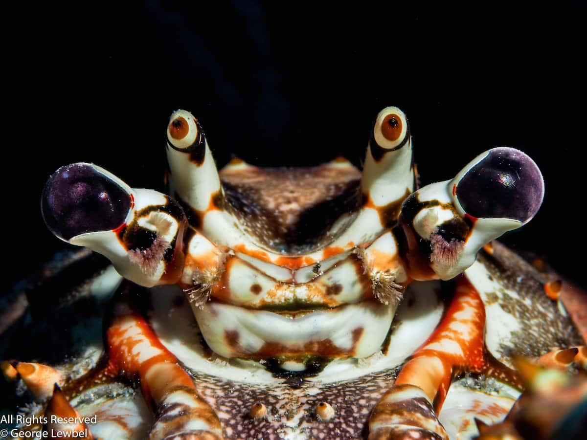 Macro Diving Cayman Islands