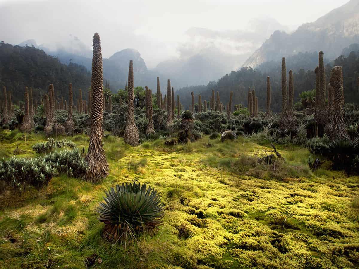 Rwenzori Mountains - Congo