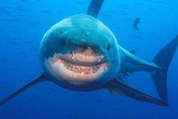 big ocean creatures