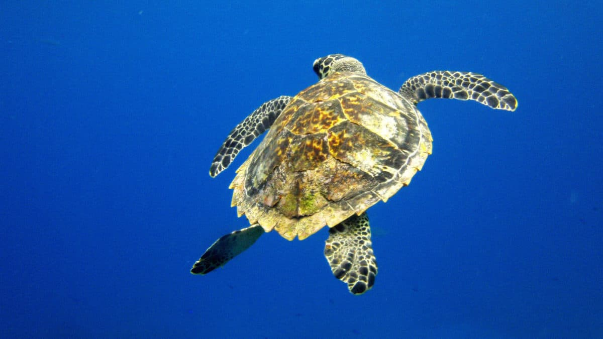 Scuba diving in Cozumel - Mexico