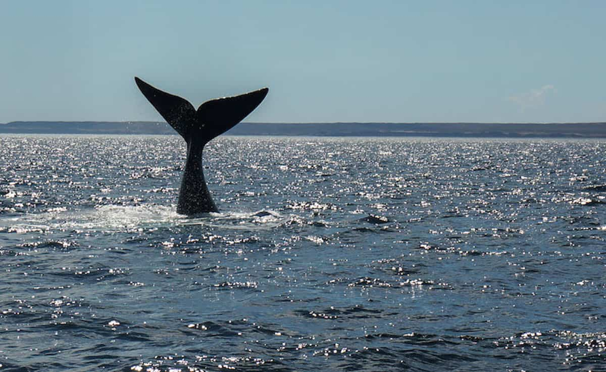 Whale Watching Whale Tail