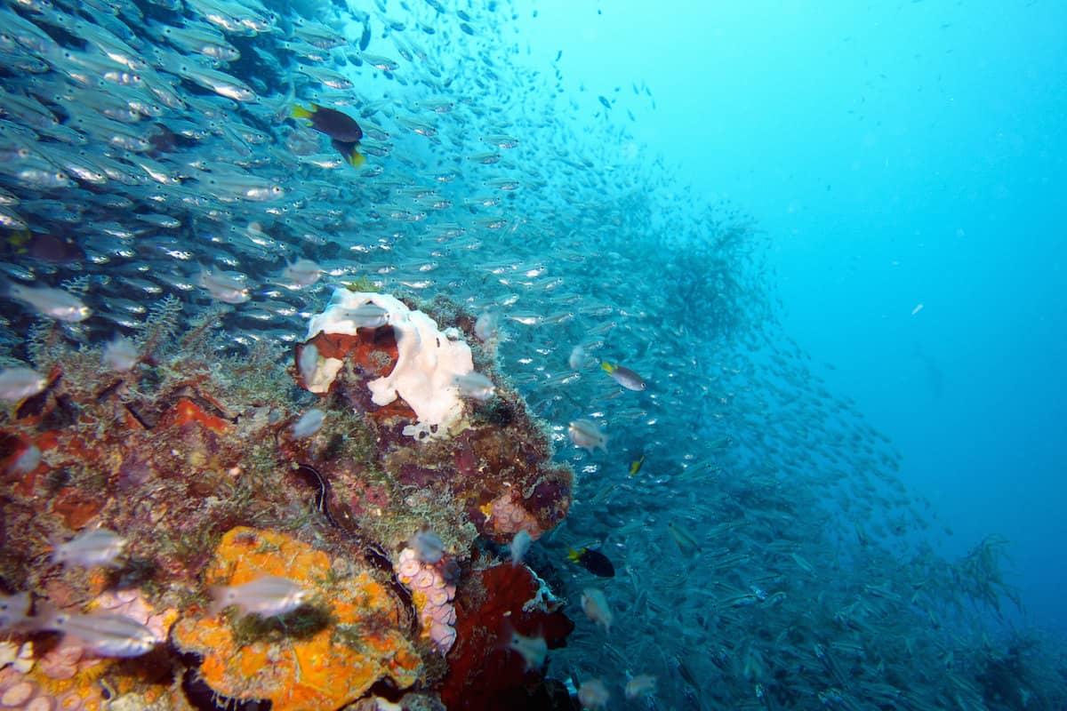 Yongala Wreck - Australia