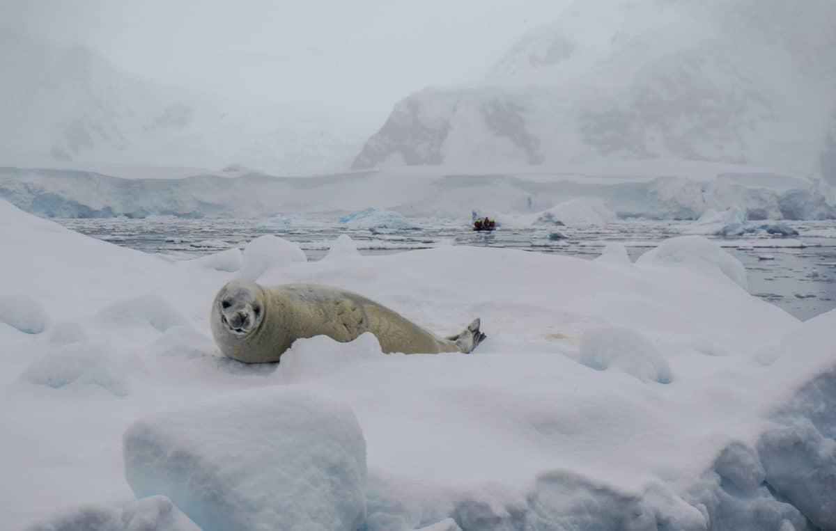 antarctica 14
