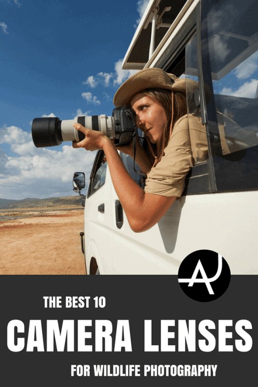 Top 11 Best Lenses For Wildlife Photography – Outdoor Photography Tips and Ideas  - Photography Equipment – Hiking Photography Articles – Nature, Wildlife and Landscape Photography Posts