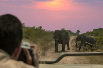 best point and shoot camera for wildlife photography