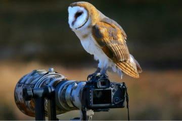 best lens for bird photography