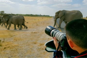 best lens for wildlife photography