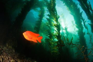 diving in catalina island