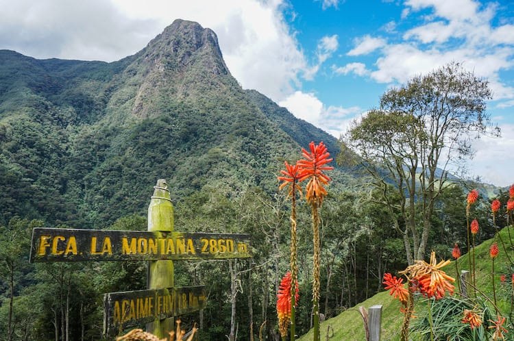 SURREAL LANDSCAPES & TALL PALMS: HIKING IN THE COCORA VALLEY, COLOMBIA
