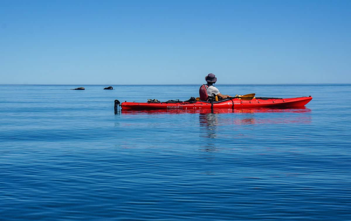 kayaking with whales in Argentina