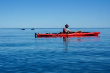 Kayaking with Southern Right Whales in Peninsula Valdes