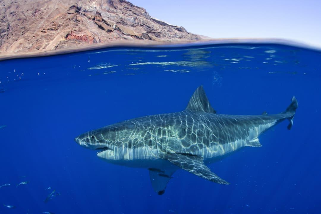 Big Ocean Creature Experience Bucket List