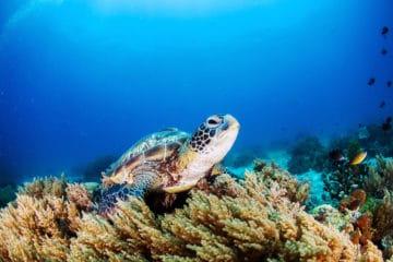 Liveaboard Diving Guide To Australia