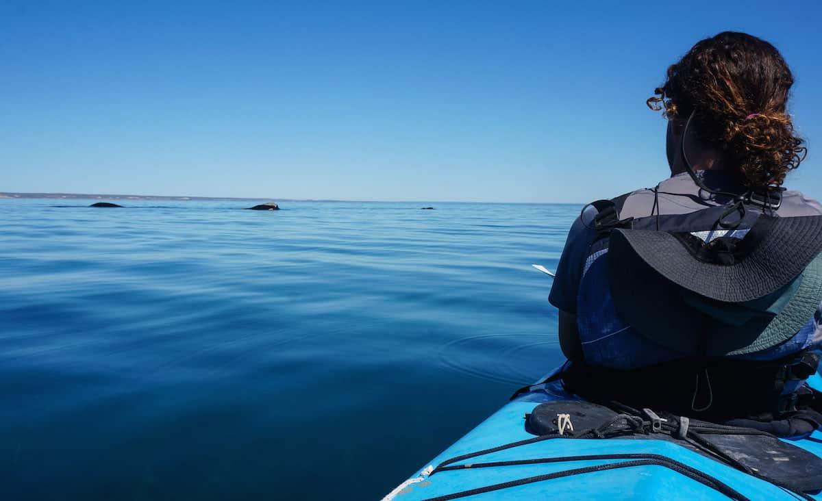 kayak safari peninsula valdes