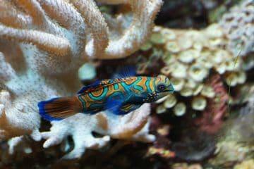 best dive sites in Bali