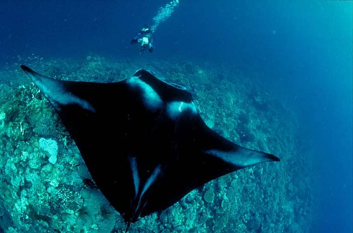 Diving Socorro Island