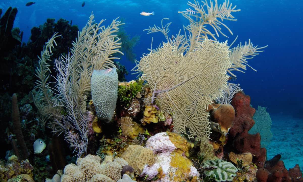 Roatan diving scuba diving in the bay of islands honduras - Roatan dive sites ...